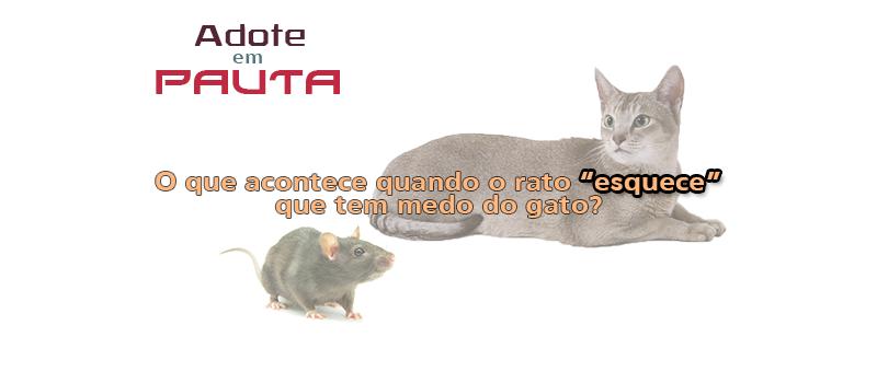 Adote em Pauta Flávia
